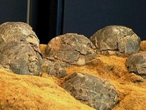 Fòssils d'ous de dinosuare